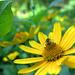 A bees world! by fayefaye