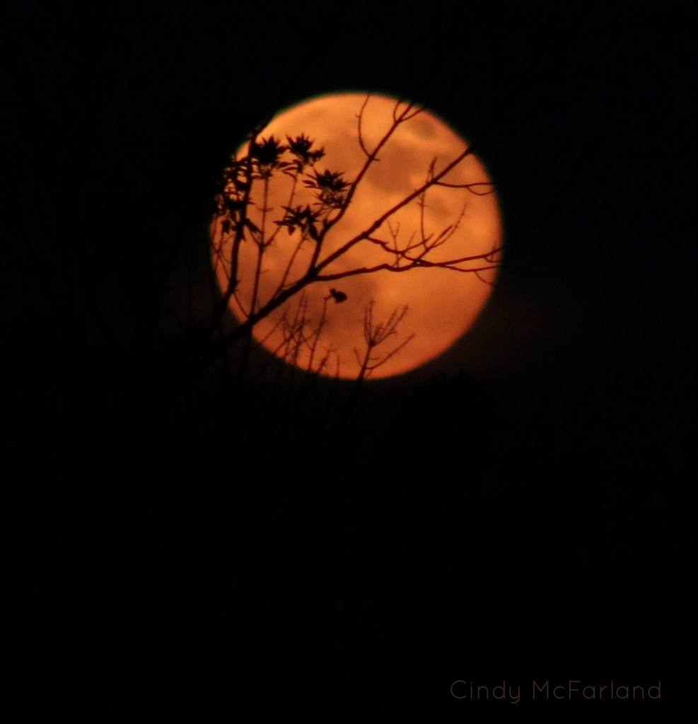 Full Moon Rising by cindymc