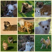 14th Jul 2014 - Sisters and brothers
