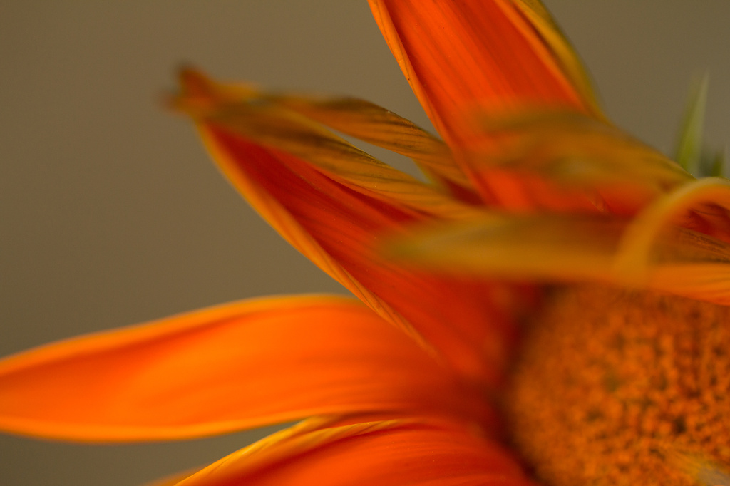 20140714 - Unknown flower by pixiemac