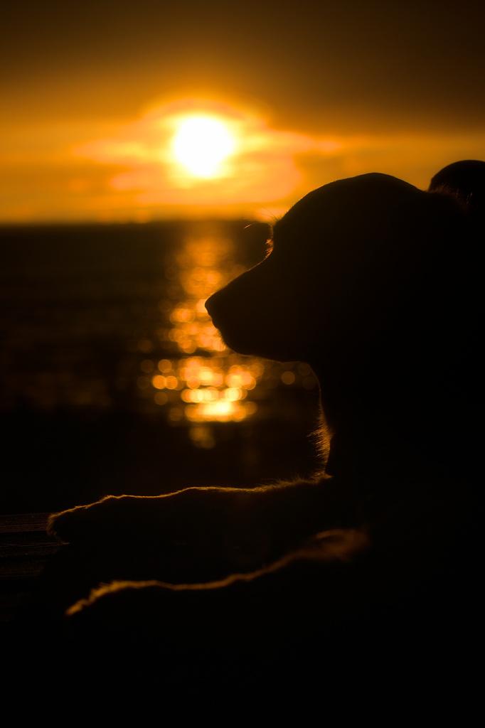 Bella Reflects on a Wonderful Doggy Day by taffy
