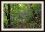 13th Oct 2010 - The Appalachian Trail