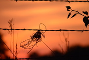 15th Jul 2014 - Barbed-Wire Bow