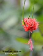 15th Jul 2014 - Botanical Beauty!