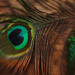 Lensbaby Peacock by mzzhope