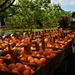 Farm Fresh.... by jayberg