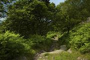 18th Jul 2014 - Rocky Path