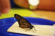 16th Jul 2014 - Monarch Teacher Netwok 6