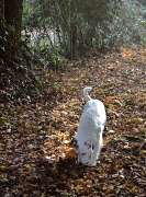 13th Oct 2010 - Were's my stick  ?