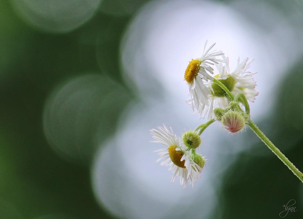 Tiny Flowers by lynnz