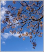 18th Jul 2014 - Tree with no leaves