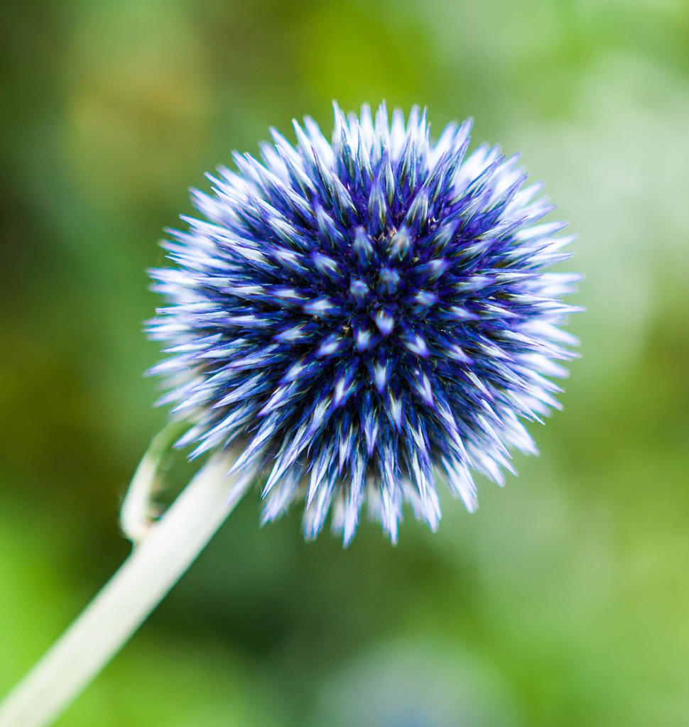 18th July 2014    -Spikey blue ball by pamknowler
