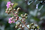 9th Jul 2014 - Undentified Southern flower