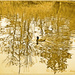 Reflections by carolmw