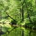 South Fork Quantico Creek by khawbecker