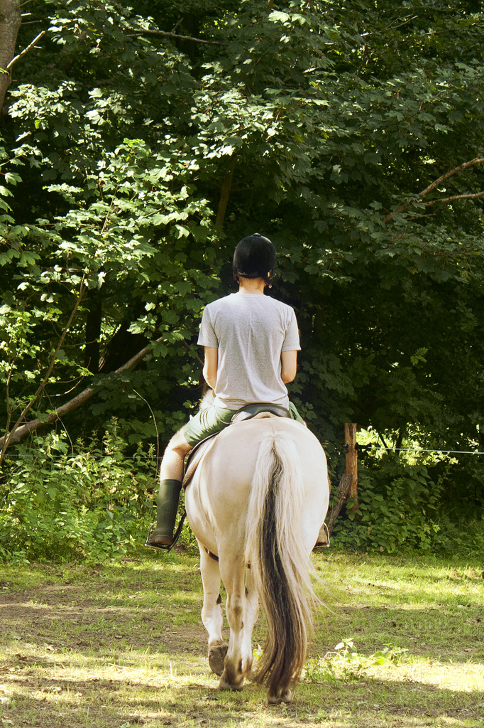 Riding into the forest by lily