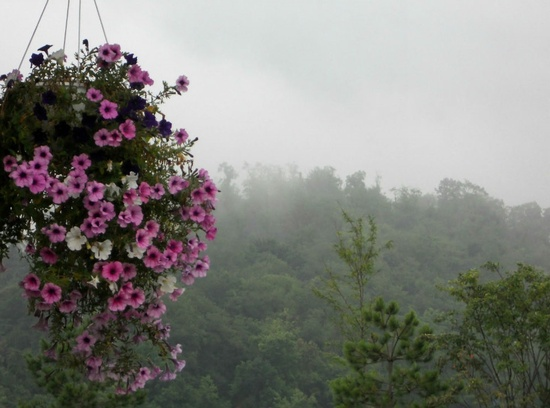 Flowers in the evening fog by mittens