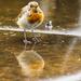 22nd July 2014 - Wet Feet by pamknowler