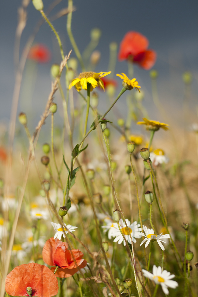 Wild flowers :) by lily