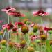 Wildflower patch by tara11