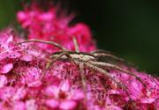 23rd Jul 2014 - Butterflies Beware