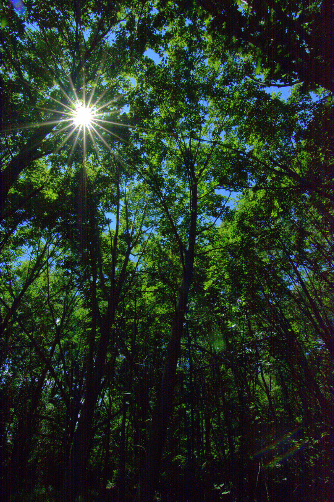 canopy flare by vankrey