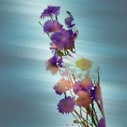 25th Jul 2014 - Flowers