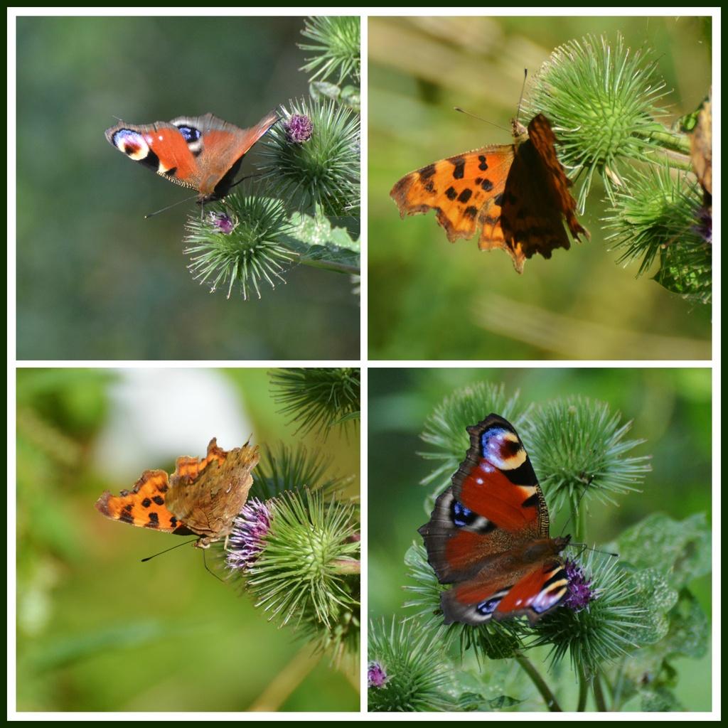 Butterflies galore by rosiekind