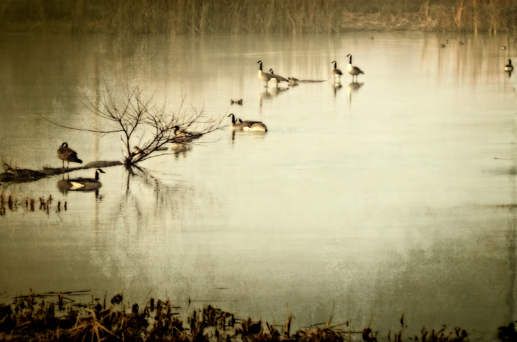 The Pond by mikegifford