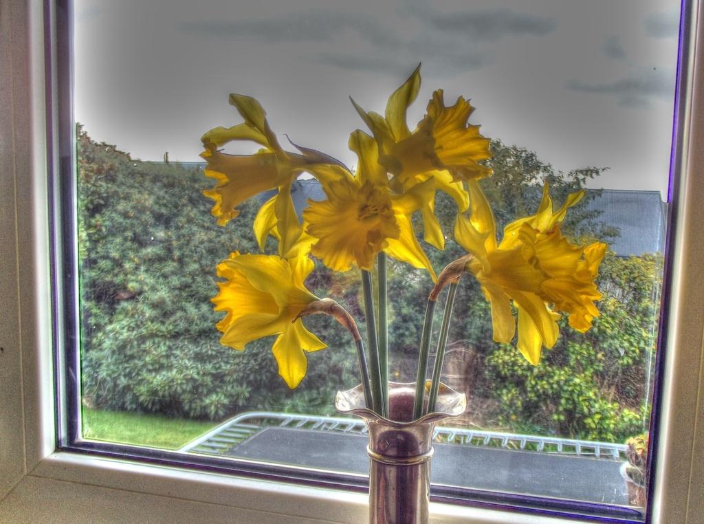 My kitchen window by maggiemae