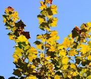 14th Oct 2010 - Fall Is In the Air