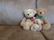 16th Oct 2010 - Teddy Bear.
