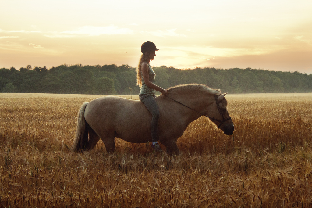 Evening Ride by lily