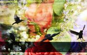 16th Jul 2014 - Fun with birds