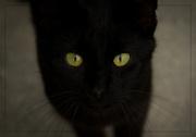 25th Jul 2014 - Is It Halloween Yet?