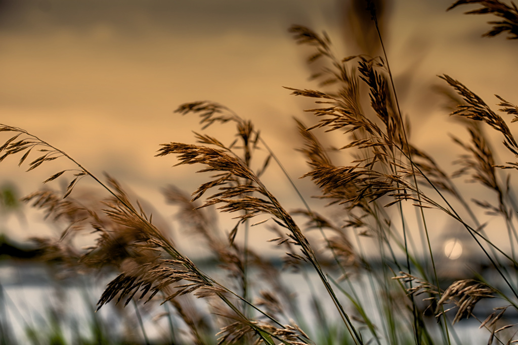 Peering Through the Grasses by taffy