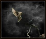 24th Jul 2014 - Bird Dreams