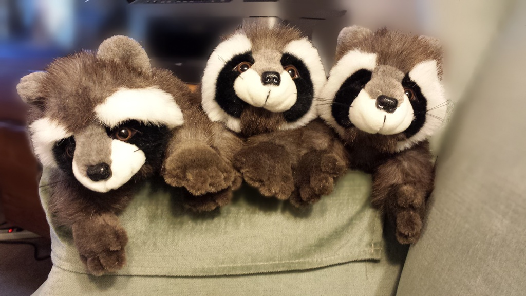 Raccoons by teiko