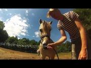 26th Jul 2014 - The horses