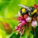 Lovely Nectar by tonygig