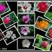 Blooming in my Garden by vernabeth