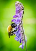 27th Jul 2014 - Bee - 27-07