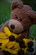 27th Jul 2014 - BennyBear with Summer Flowers