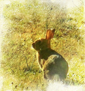 27th Jul 2014 - Backlit bunny
