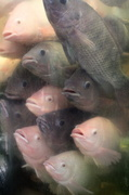 26th Jul 2014 - It's getting crowded in here...
