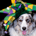 Head Shot - Maggie the Jester by cdonohoue