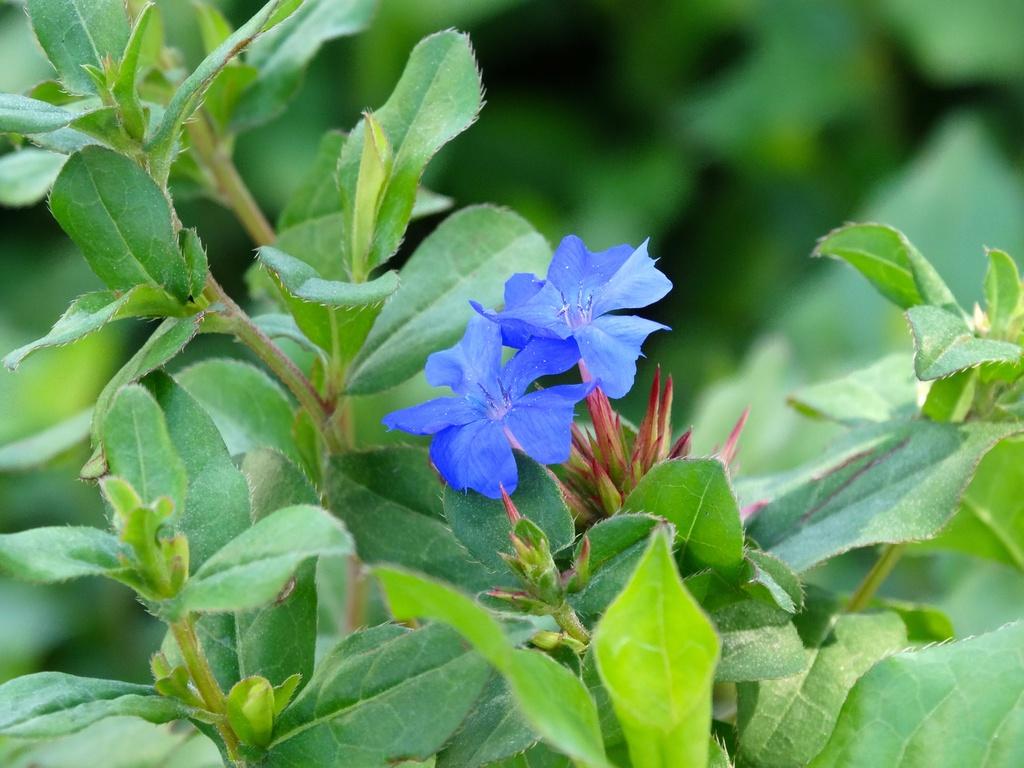 Blooming in True Blue by khawbecker