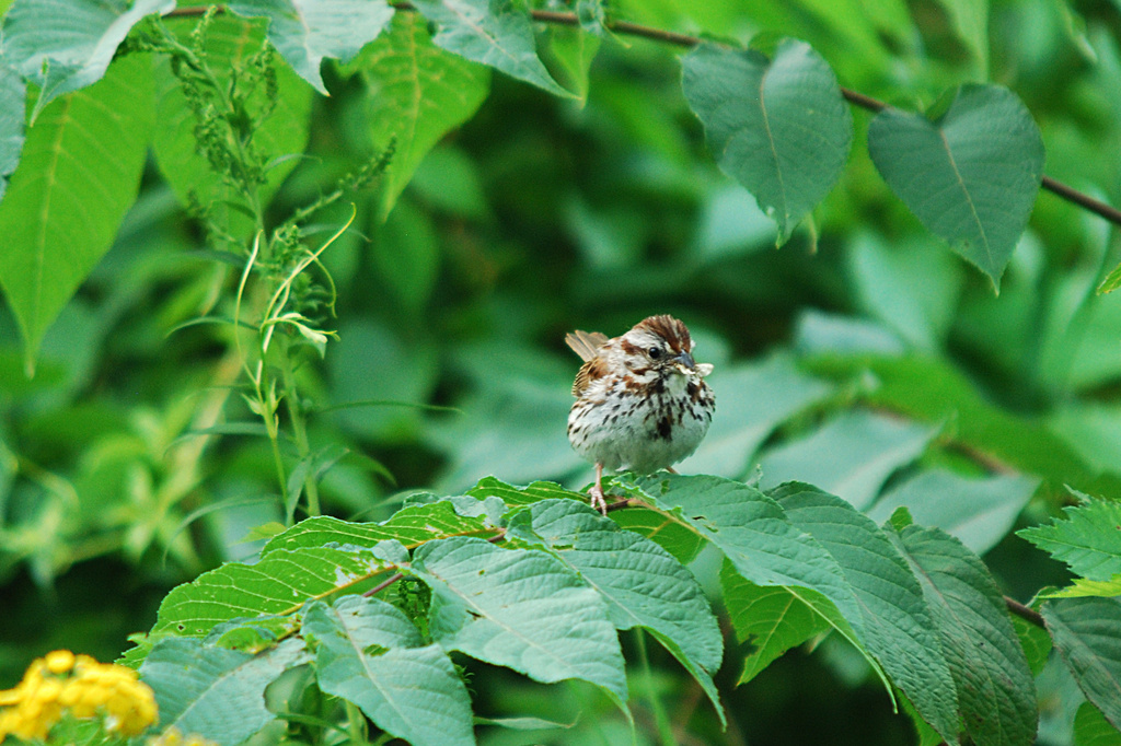 Little sparrow! by fayefaye