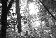 28th Jul 2014 - Woodland Sun Shower