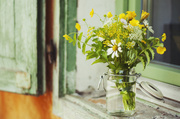 28th Jul 2014 - Summer flowers